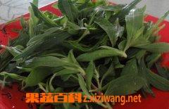果蔬百科野菜扫帚菜